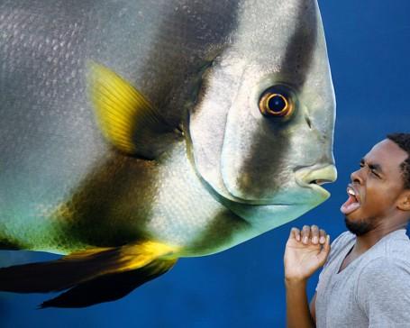 Fish composite